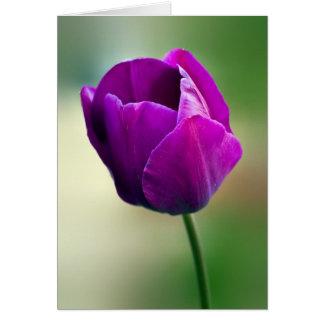 Cartão Tulipa roxa