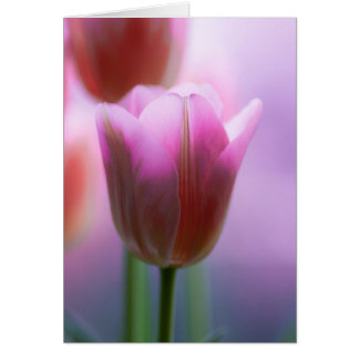 Cartão Tulipas cor-de-rosa
