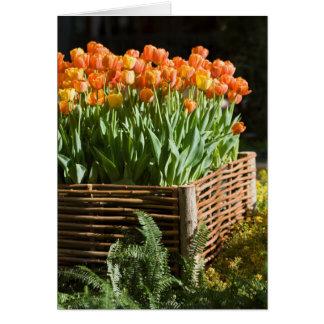 Cartão Tulipas de florescência vibrantes