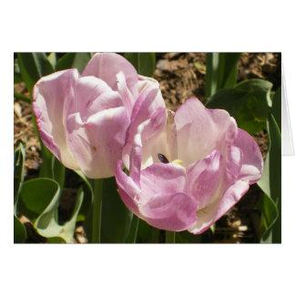 Cartão Tulipas roxas do Central Park