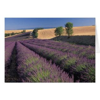 Cartão UE, France, Provence, campos 3 da lavanda