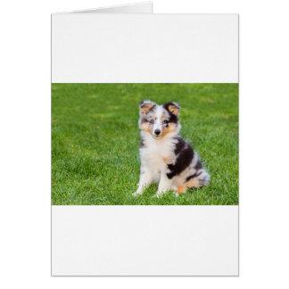 Cartão Um cão novo do sheltie que senta-se na grama