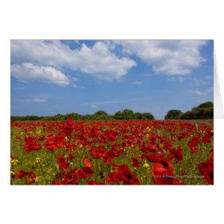 Cartão Um cheio do campo de flores vermelhas