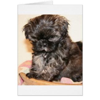 Cartão Um filhote de cachorro bonito de Shih Tzu faz este