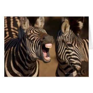 Cartão Um fim-acima de uma zebra que mostra seus dentes,