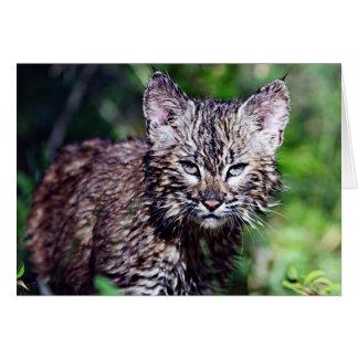 Cartão Um gatinho pequeno molhado do lince
