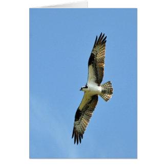 Cartão Um Osprey sobe!