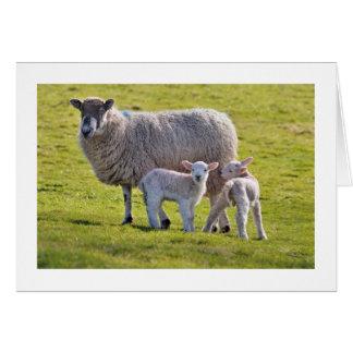 Cartão Um par bonito de cordeiros com sua mãe