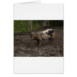 Cartão Um porco no estrume