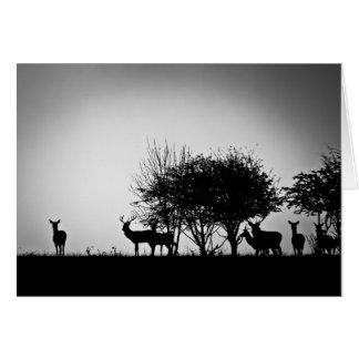 Cartão Uma imagem de alguns cervos na névoa da manhã