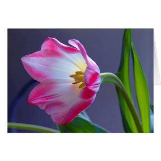 Cartão Uma única tulipa
