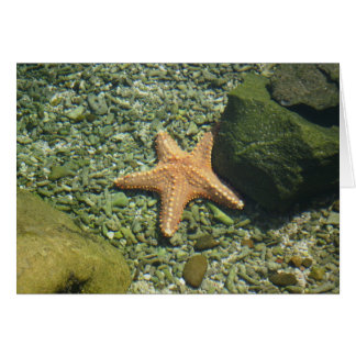 Cartão Única estrela do mar