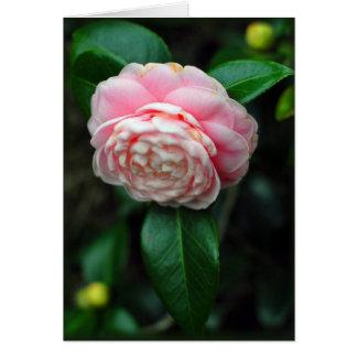 Cartão Única flor da camélia