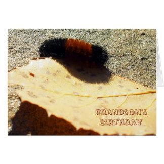 Cartão Urso Caterpillar Woolly