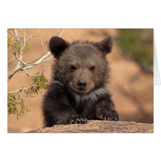 Cartão Urso Cub do urso
