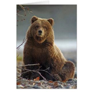 Cartão Urso de Brown do Alasca em Kenai NWR, Alaska