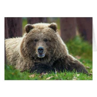 Cartão Urso de Brown do Alasca em Kenai NWR em Alaska