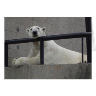 Cartão Urso polar