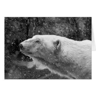 Cartão Urso polar calmo