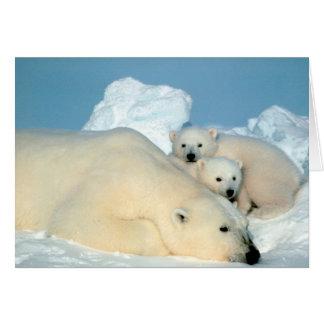 Cartão Urso polar & Cubs por Steve Amstrup