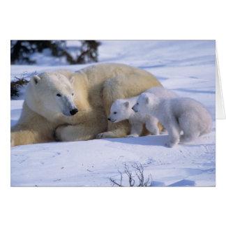 Cartão Urso polar fêmea que encontra-se para baixo com 2