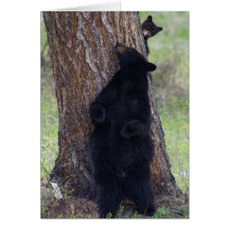 Cartão Ursos pretos, porca e Cub