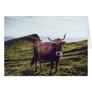 Cartão Vaca bovina na paisagem bonita