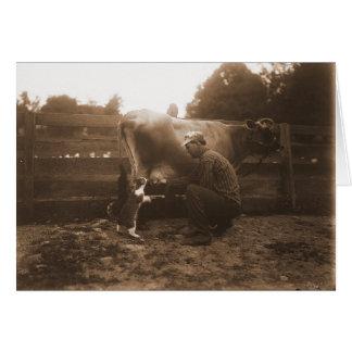 Cartão Vaca de ordenha do homem no Barnyard & gato de