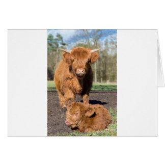 Cartão Vaca escocesa do escocês da mãe perto da vitela