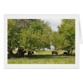 Cartão - vacas no campo