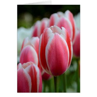 Cartão vazio com tulipas cor-de-rosa