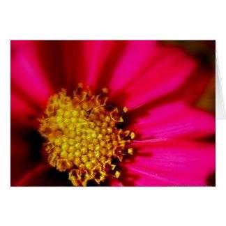 Cartão Vazio cor-de-rosa vívido Notecard do Zinnia