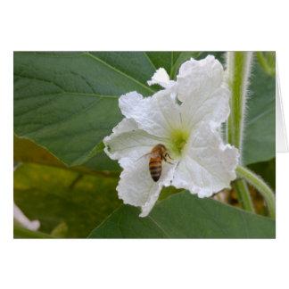 Cartão Vazio da flor & da abelha da cabaça