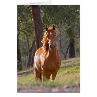 Cartão vazio da foto bonita do cavalo da castanha