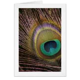 Cartão vazio da pena do pavão