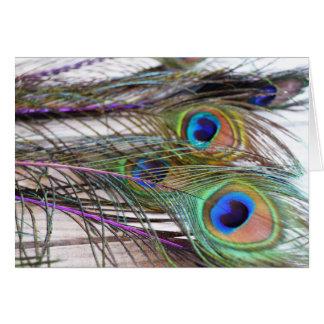 Cartão vazio da pena do pavão com cores vívidas