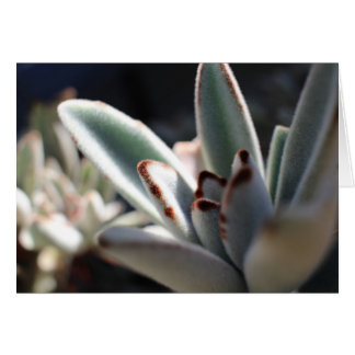 Cartão vazio da planta do Succulent
