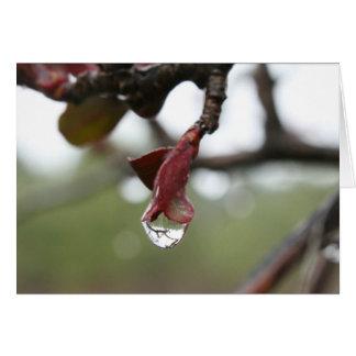 Cartão vazio da reflexão do pingo de chuva