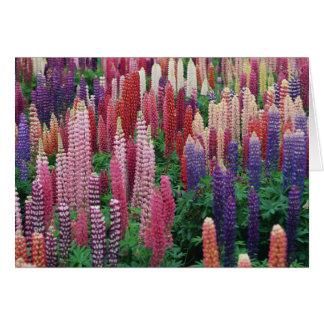 Cartão vazio das flores do Lupin
