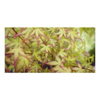 Cartão vazio das folhas de bordo japonesas cartão com foto