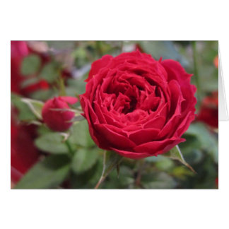 Cartão vazio das rosas vermelhas