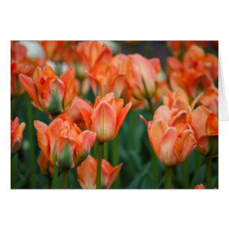 Cartão vazio das tulipas alaranjadas