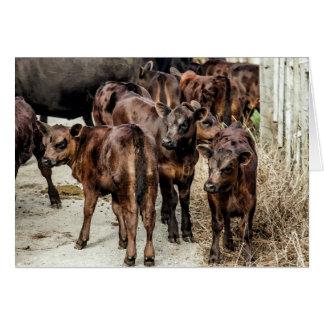 Cartão vazio das vitelas dos gados bovinos de