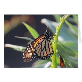 Cartão vazio de borboleta de monarca