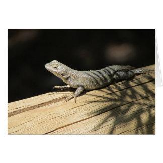 Cartão vazio de lagarto de cerca ocidental