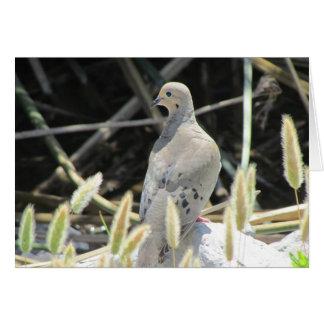 Cartão vazio de lamentação da pomba