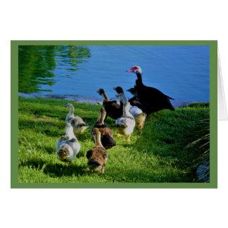 Cartão vazio de patos de Muscovy