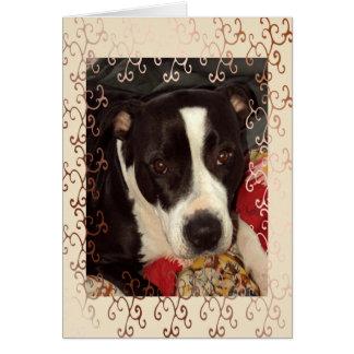 Cartão Vazio de Staffordshire Terrier