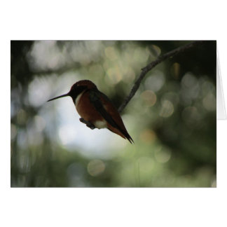 Cartão vazio do colibri de Allen