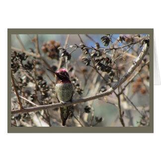 Cartão vazio do colibri de Anna
